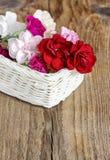 Rote, rosa und weiße Gartennelkenblumen Stockbild