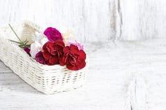 Rote, rosa und weiße Gartennelkenblumen Stockfoto