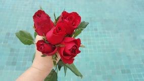 Rote rosafarbene Blume in der Hand für Valentinsgrußtag, Hochzeitskarte auf blauem Pool des Hintergrundes lizenzfreies stockfoto