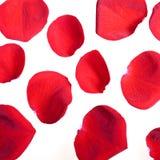 Rote rosafarbene Blumenblätter lizenzfreies stockbild
