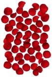 Rote rosafarbene Blumenblätter getrennt auf weißem Hintergrund Stockfotografie