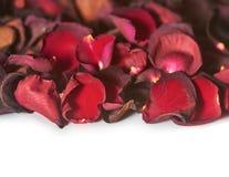 Rote rosafarbene Blumenblätter Hintergrund, Muster Lokalisiert auf Weiß stockbild