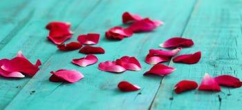 Rote rosafarbene Blumenblätter zerstreuten auf blauen hölzernen Hintergrund der antiken Knickente Stockfotografie