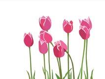Rote rosafarbene tulipes stock abbildung