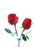 Rote Rose Stockfotografie