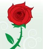 Rote Rose stock abbildung