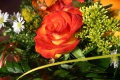 Rote Rose Lizenzfreies Stockfoto