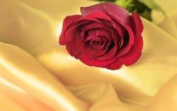 Rote Rose lizenzfreie stockbilder