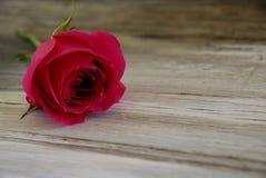 Rote Rose auf altem Stallholz Stockfoto