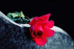 Rote Rose auf Finanzanzeige stockfotos