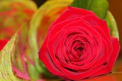 Rote Rose in einem einzelnen Blumenstrauß stockbilder