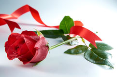 Rote Rose Flower With Red Ribbon Lizenzfreie Stockfotos