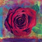 Rote Rose Foto Illustration lizenzfreies stockbild