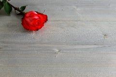 Rote Rose mit Stiel und Blätter auf hölzernem Hintergrund stockfotos