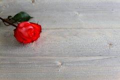 Rote Rose mit Stiel und Blätter auf hölzernem Hintergrund lizenzfreie stockbilder
