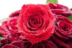 Rote Rose mit Tau Lizenzfreies Stockfoto