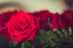 Rote Rosen über Valentinsgrüßen lizenzfreie stockbilder