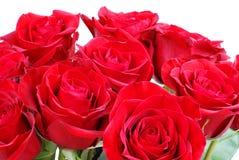 Rote Rosen Stockfoto