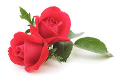Rote Rosen Stockfotografie