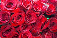 Rote Rosen Stockfotos