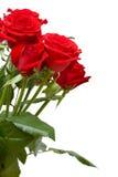 Rote Rosen Lizenzfreies Stockfoto