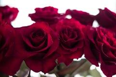 Rote Rosen auf dem unscharfen Hintergrund stockfotografie