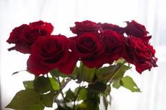 Rote Rosen auf dem unscharfen Hintergrund lizenzfreie stockfotografie