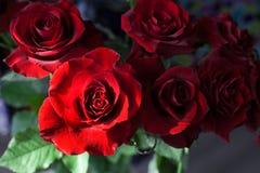 Rote Rosen auf dem unscharfen Hintergrund lizenzfreie stockfotos