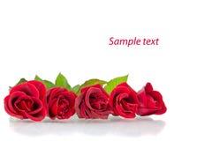 Rote Rosen auf dem Weiß Stockfoto