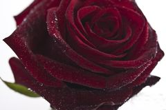 Rote Rosen auf dunklem Hintergrund Lizenzfreies Stockfoto