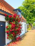 Rote Rosen auf hölzernem weißem Haus Lizenzfreie Stockfotos