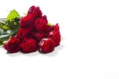 Rote Rosen auf weißem Hintergrund Stockfotos