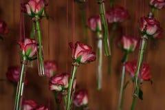 Rote Rosen Blühen Sie in den Glasrohrvasen, Blumendekor, Frühling Stockfoto