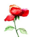 Rote Rosen-Blume Stockfoto