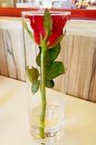 Rote Rosen-Blume im Glas Stockbild