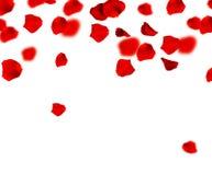 Rote Rosen-Blumenblätter Stockbilder