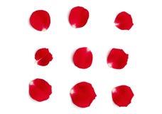 Rote Rosen-Blumenblätter Stockbild