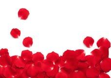 Rote Rosen-Blumenblätter Lizenzfreie Stockfotografie
