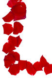 Rote Rosen-Blumenblätter Stockfoto