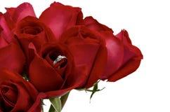 Rote Rosen der neuen Blüte, die silbernen Ring mit Diamanten für Valentine's-Tag haben lizenzfreie stockfotografie