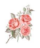 Rote Rosen des Aquarells auf weißem Hintergrund lizenzfreie abbildung