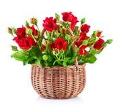 Rote Rosen des Blumenstraußes im Korb stockbild