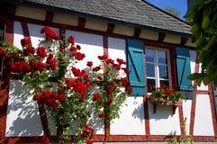 Rote Rosen, die oben ein gezimmertes Haus klettern Stockfoto