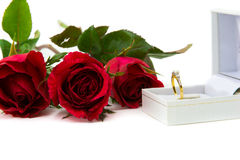 Rote Rosen für ein spezielles schellen mich Auf einem weißen Hintergrund Lizenzfreie Stockbilder
