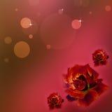 Rote Rosen für meine Liebe Stockfotos