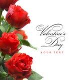 Rote Rosen getrennt auf weißem Hintergrund Stockbild