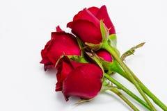 Rote Rosen getrennt auf weißem Hintergrund Stockfotografie