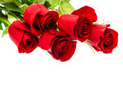 Rote Rosen getrennt auf weißem Hintergrund Frische Blumen des Blumenstraußes Stockfoto