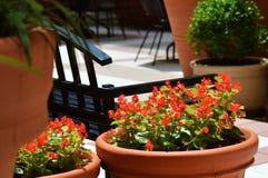 Rote Rosen im Garten Stockfotografie