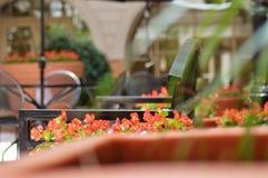 Rote Rosen im Garten Lizenzfreies Stockfoto